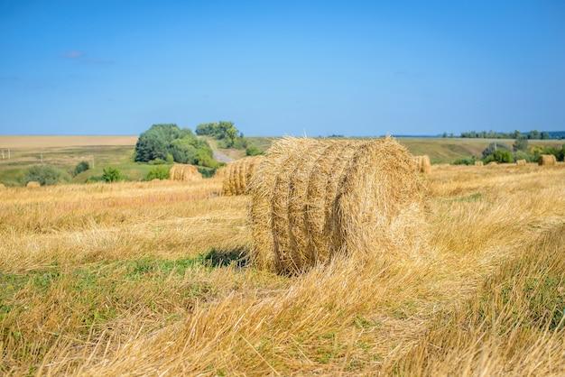 晴天の青い空を背景に黄色のフィールドでわらの美しい干し草