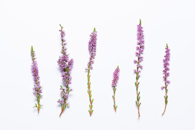 Beautiful heather twigs on white background. minimalism style concept of beauty and difference.