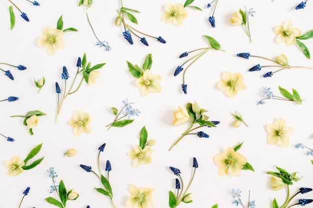 美しいヘレボルスの花、ムスカリの花、白い背景の葉。フラットレイ、トップビュー