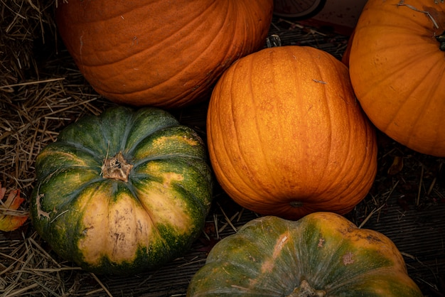 Beautiful high angle shot of orange and green pumpkins fille don a dry grass