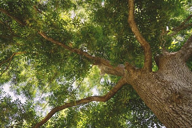 Beautiful high old tree low angle view