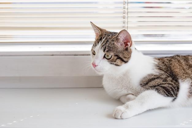 아름다운 집 고양이가 그 앞에서 보이고 창틀에 누워 텍스트를위한 장소
