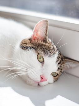창틀에 누워 아름다운 집 고양이, 텍스트, 햇빛 광선 장소