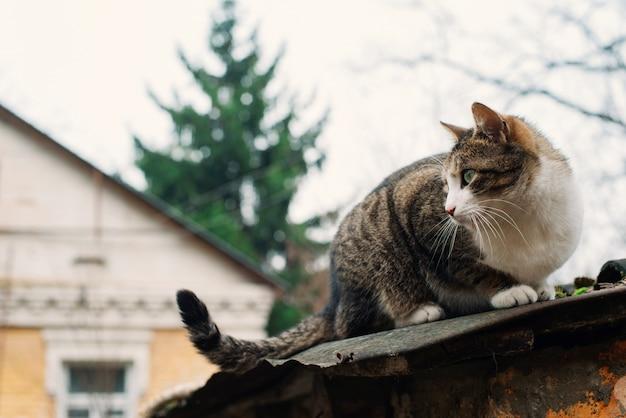 古い破壊された家の屋根の上の美しいホームレス猫。動物への保護と援助の概念。