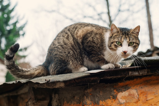 Beautiful homeless cat on the roof of an old destroyed house. the concept of protection and assistance to animals.