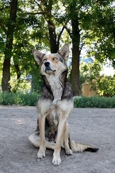青い目をした美しいホームレス犬。