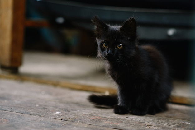 黒い色の美しいホームレスのふわふわ子猫。