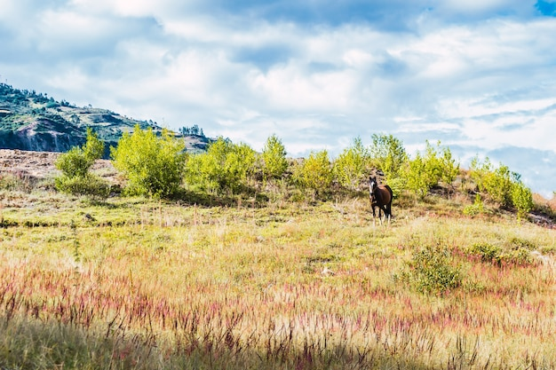 Bellissimo cavallo su una verde collina con un cielo nuvoloso