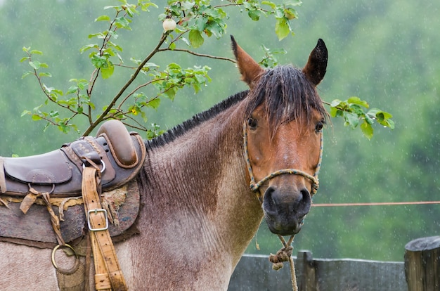 雨の日のネイティブフィールドの美しい馬