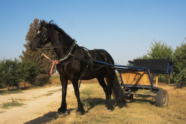 Beautiful horse outdoor, summer day