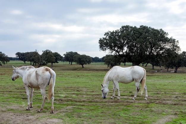 Beautiful horses in the countyside