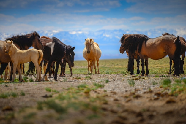 Beautiful horses in the field on blue sky