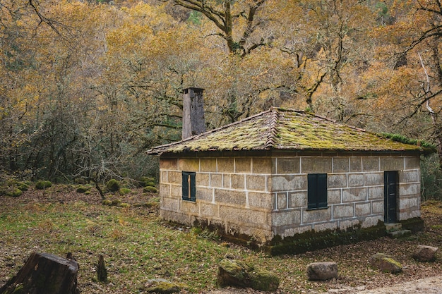 Красивый дом с покрытой мхом крышей посреди леса
