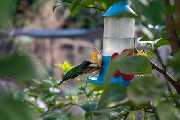 정원에서 아름다운 벌새 식수