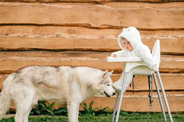 Beautiful husky standing near little child sitting in high chair in white bear costume outdoor