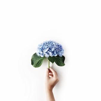 여자의 손에 아름 다운 수 국 꽃 흰색 절연
