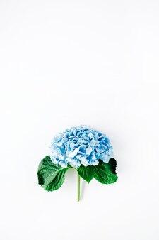 아름 다운 수 국 꽃 흰색 절연