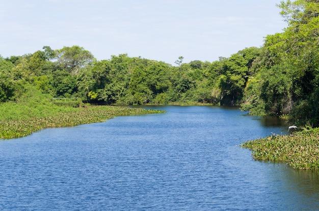 브라질 습지의 아름다운 이미지