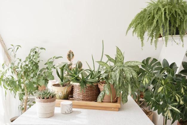 Beautiful indoor green plants growing in different pots
