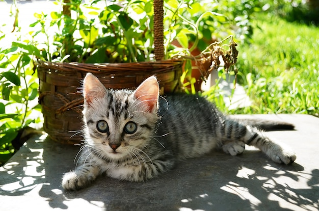 Beautiful kitten in garden