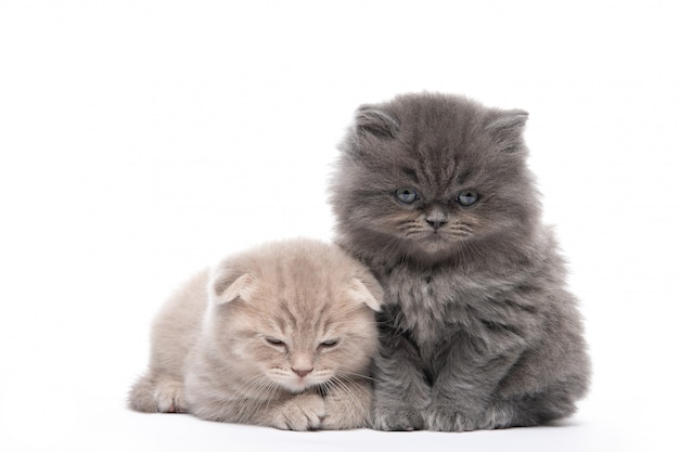Beautiful kittens are sitting on an isolated