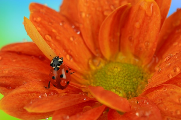 Beautiful ladybird on flower