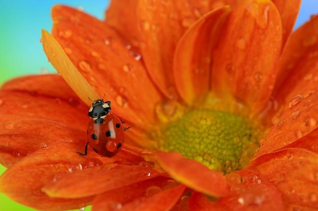 꽃에 아름 다운 무당 벌레