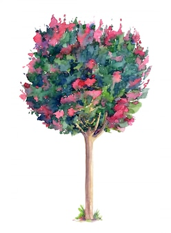 Beautiful lagerstroemia (crepe myrtle)  tree. watercolor hand drawn illustration isolated
