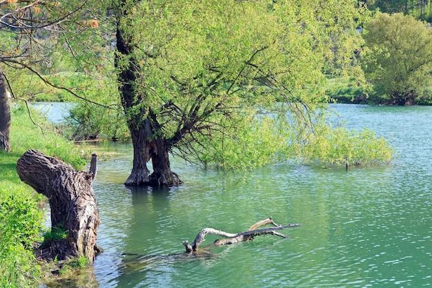 물에 아름다운 호수와 봄 나무