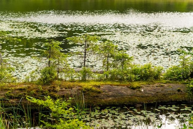 山の美しい湖
