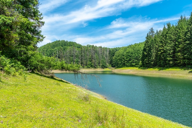 周りに松林と青い空のある美しい湖