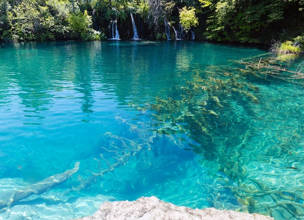 Beautiful lake with clear water and dry tree on the bottom (plitvice lakes national park, croatia)