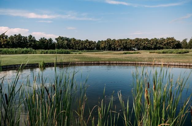 갈대 생태 자연 청정 풍경이 있는 아름다운 호수