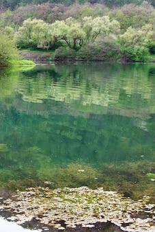 水草とカエルと春の岩のある美しい湖水面の山の反射