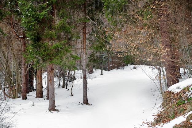 冬の日のリゾートの美しい風景