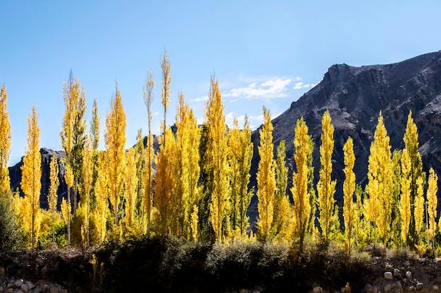 インド北部レーラダックの美しい風景、カラフルな秋とヒマラヤ山脈