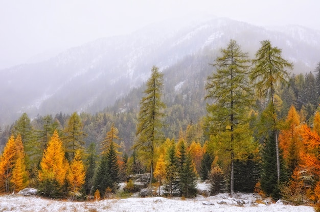 Beautiful landscape of autumn trees during winter