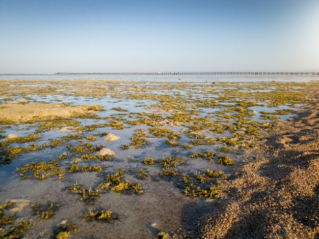 Beautiful landscape of coral reef, sea weeds and long pier at sea lit by sunset light rays