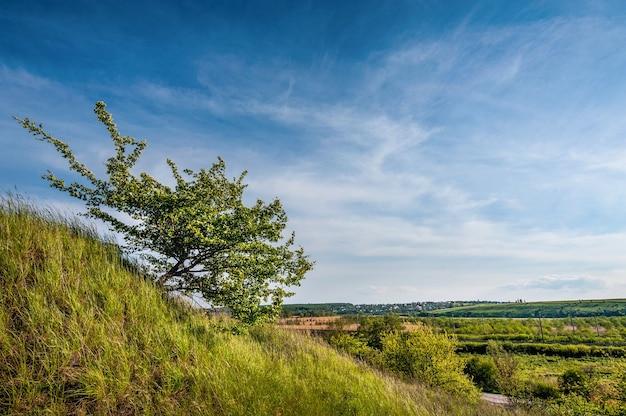 Красивый пейзаж от холма до обрыва с одиноким цветущим деревом и простором внизу, украина, медоборы, тернопольская обл.