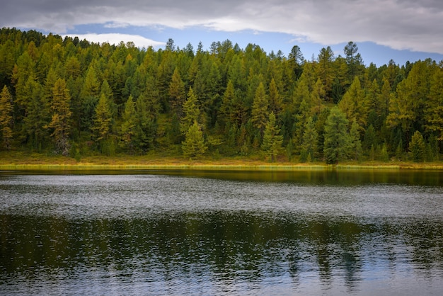 Beautiful landscape of high mountain lake with dense coniferous forest. national park, altai reserve, siberia, russia.