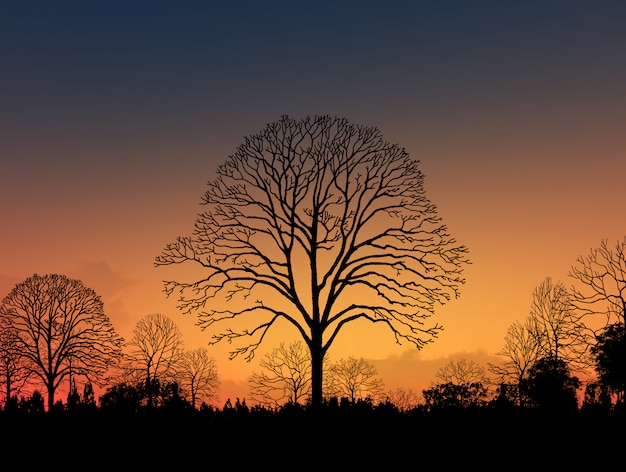 Beautiful landscape image with trees silhouette at sunset