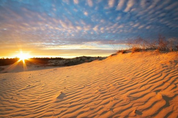 Красивый пейзаж в пустыне. композиция природы.