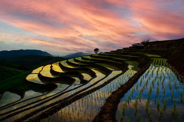 Красивый пейзаж вечером в гостевом доме pa bong piang rice terraces на севере чиангмая, таиланд