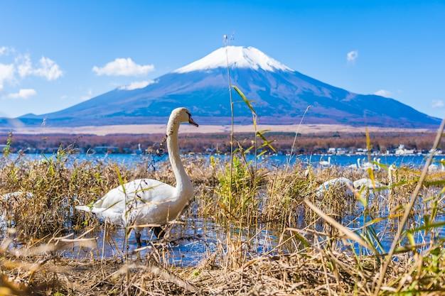Beautiful landscape of mountain fuji around yamanakako lake