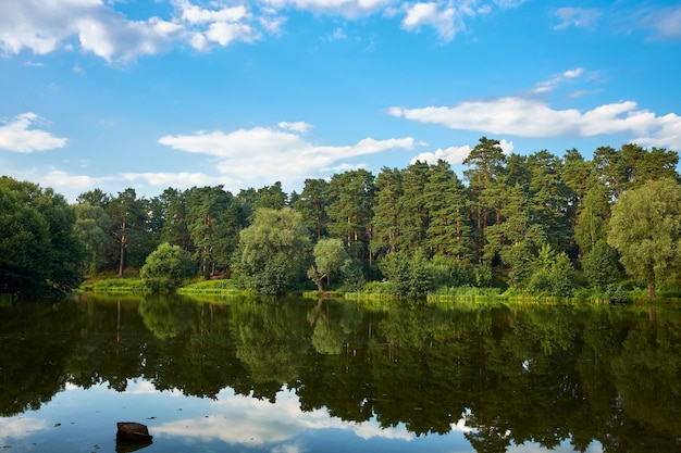 Beautiful landscape of nature, a forest lake, green pine forest reflecting in the water