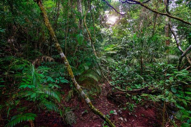Красивый пейзаж природа тропического дождевого леса в таиланде.