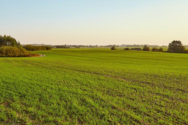 緑の野原の美しい風景。