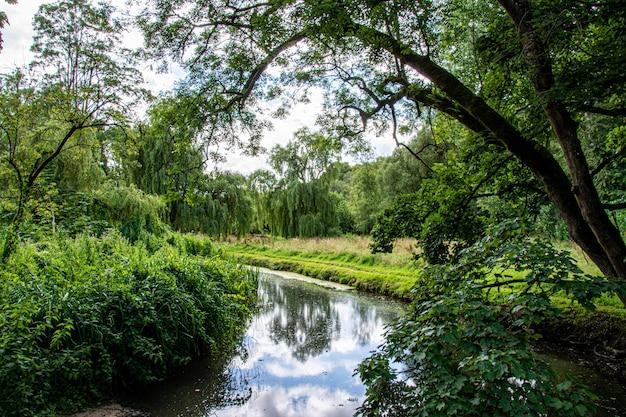 森の中の川の美しい風景