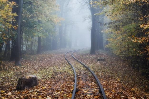 가을 안개 낀 공원과 노란 잎의 아름다운 풍경