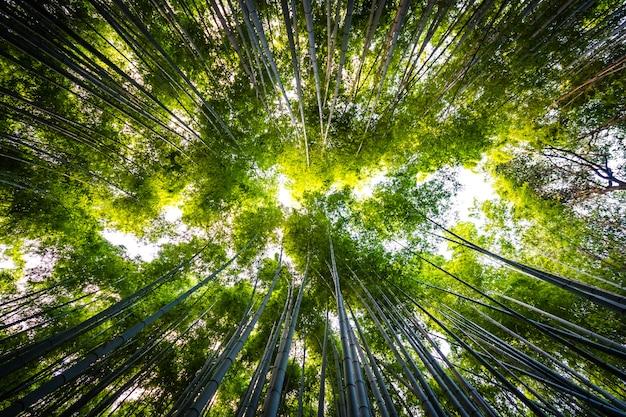 아라시야마 교토 숲에서 대나무 숲의 아름 다운 풍경
